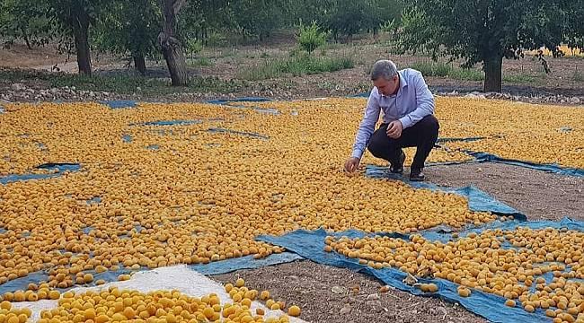 Çınar, 16 Ekim Dünya Gıda Gününü kutladı
