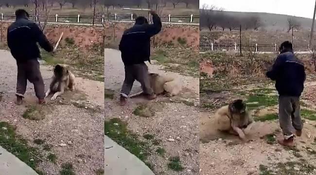 Köpeğini sopayla döven şahıs büyük tepki çekti - Malatya Tarafsız